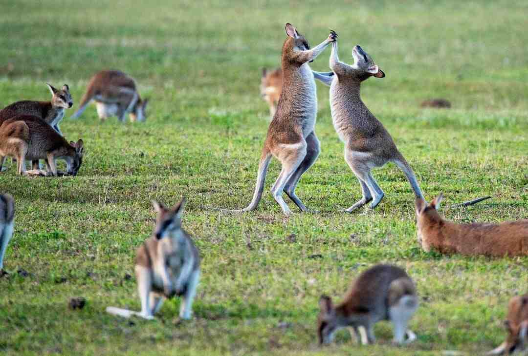Comment déménager en Australie